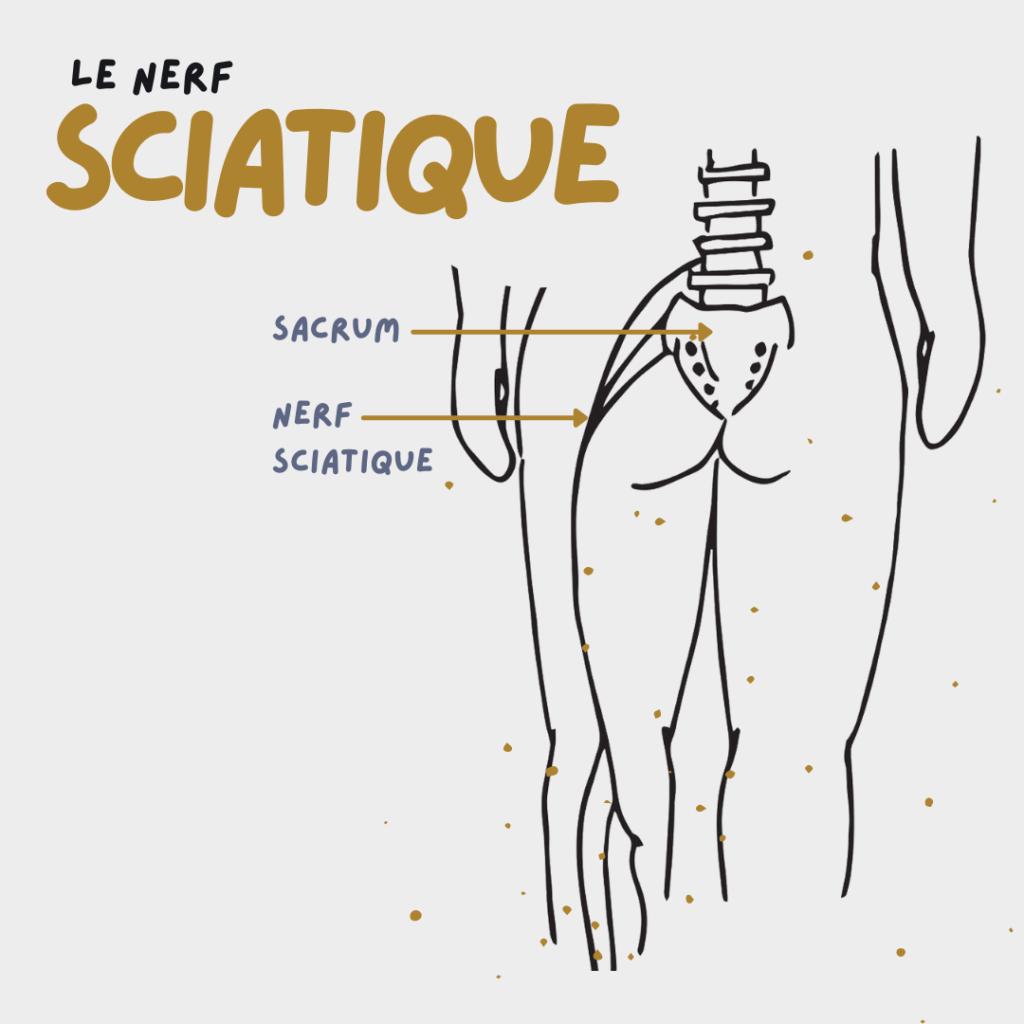 Image du nerf sciatique