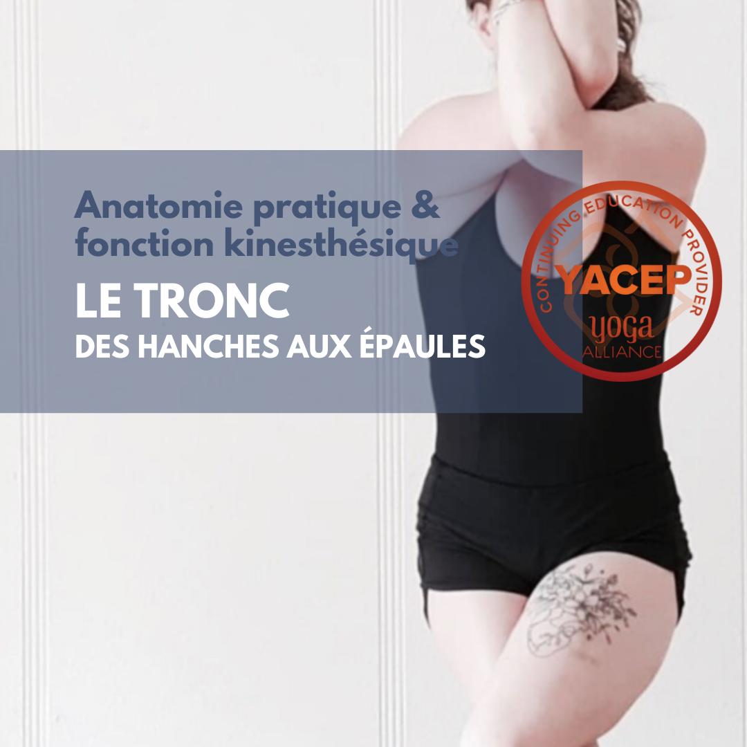Module 2 Le Tronc